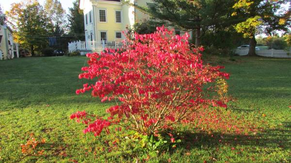Fall colours in the yard