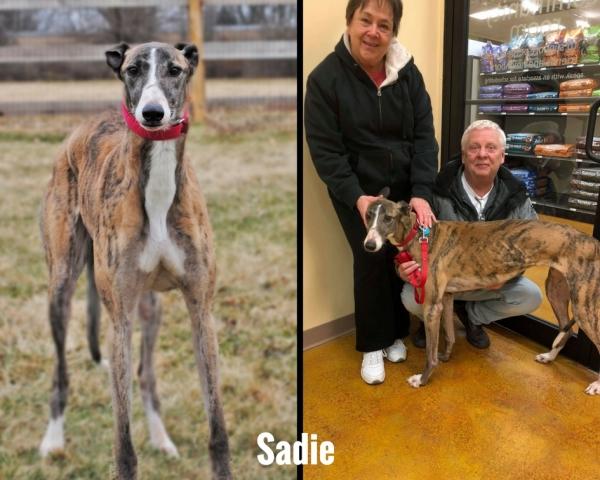 Sorrel, now Sadie