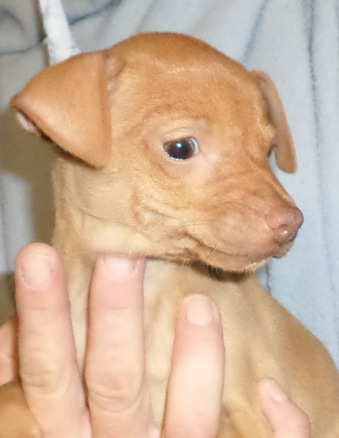 Annie puppy rescue