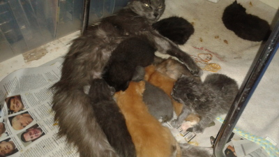 other rescued animals mom cat dumped at shelter while in labor