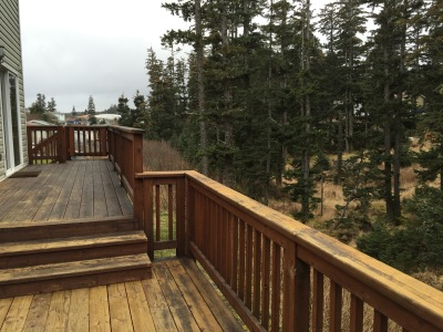 Back Decks facing lush spruce forest.