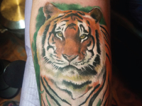 tiger jungle Tattoo