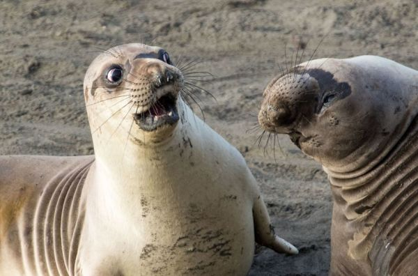 14 Funniest Wildlife Photos Of 2017 That Will Make You Laugh