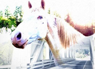 Covered Bridges & Horsepower