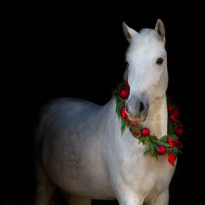 Holiday Horse Auction