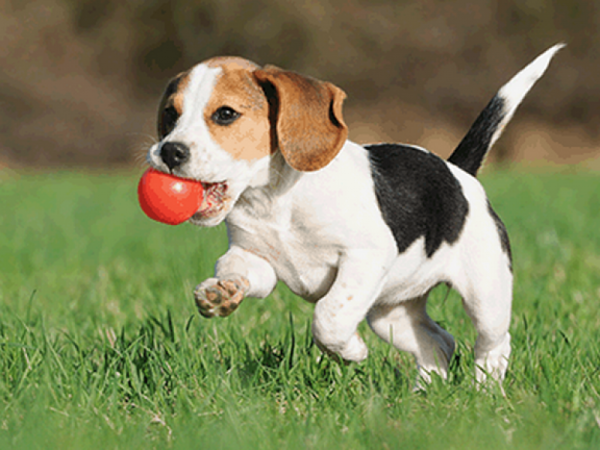 5 Simple Steps to Stimulate a Dog Showing Things