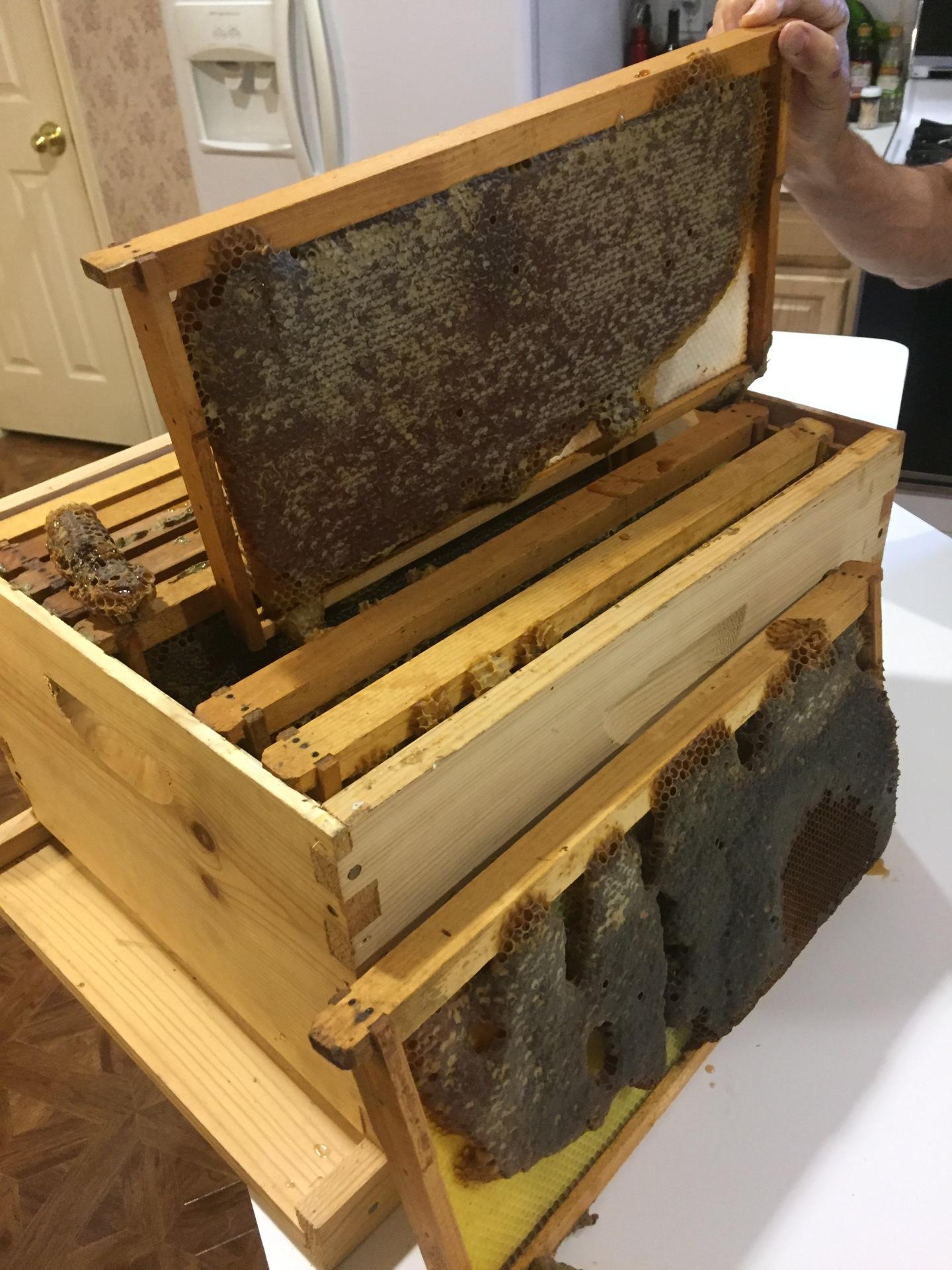 Frames Of Honey