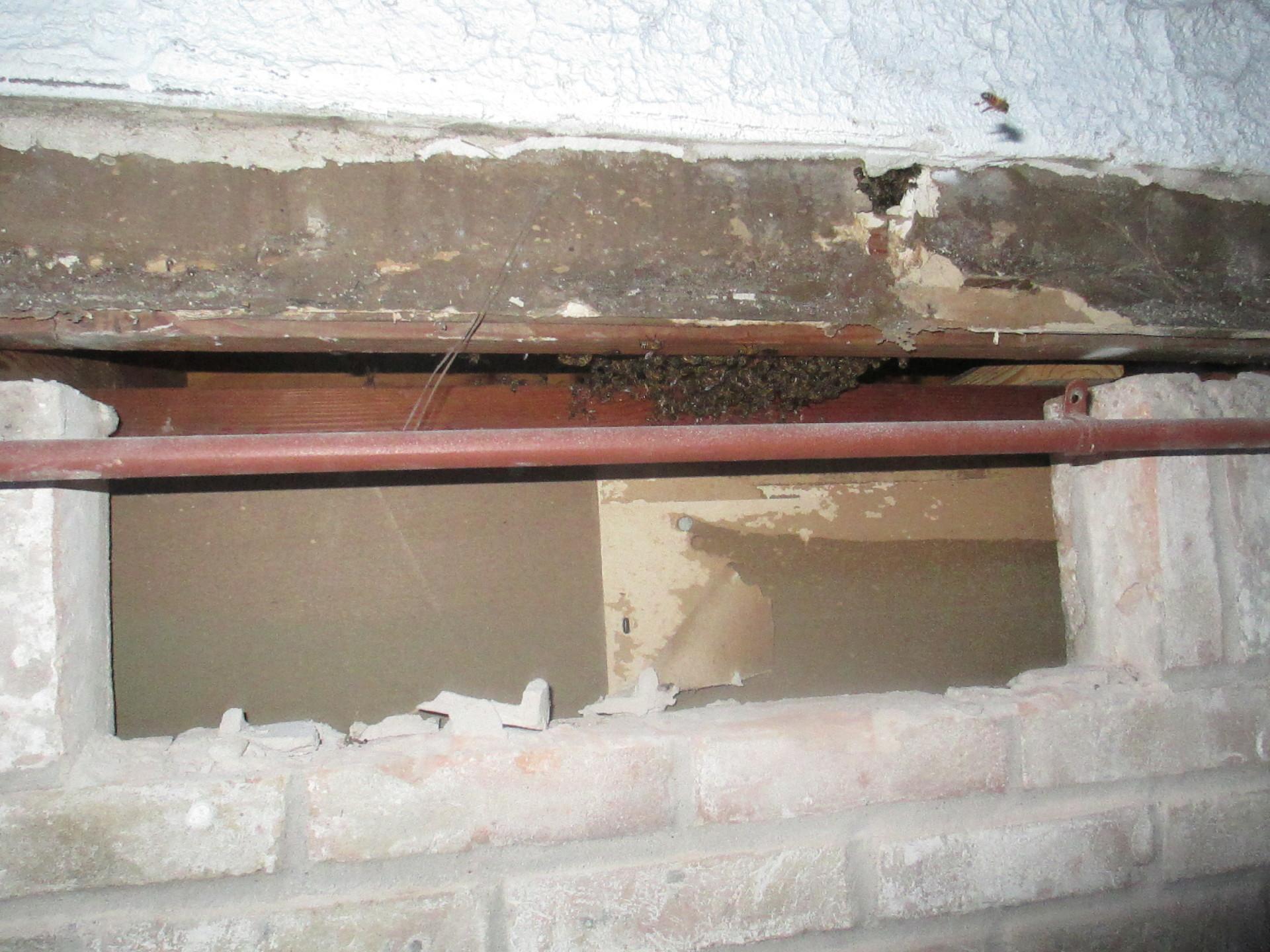 Removed Bricks