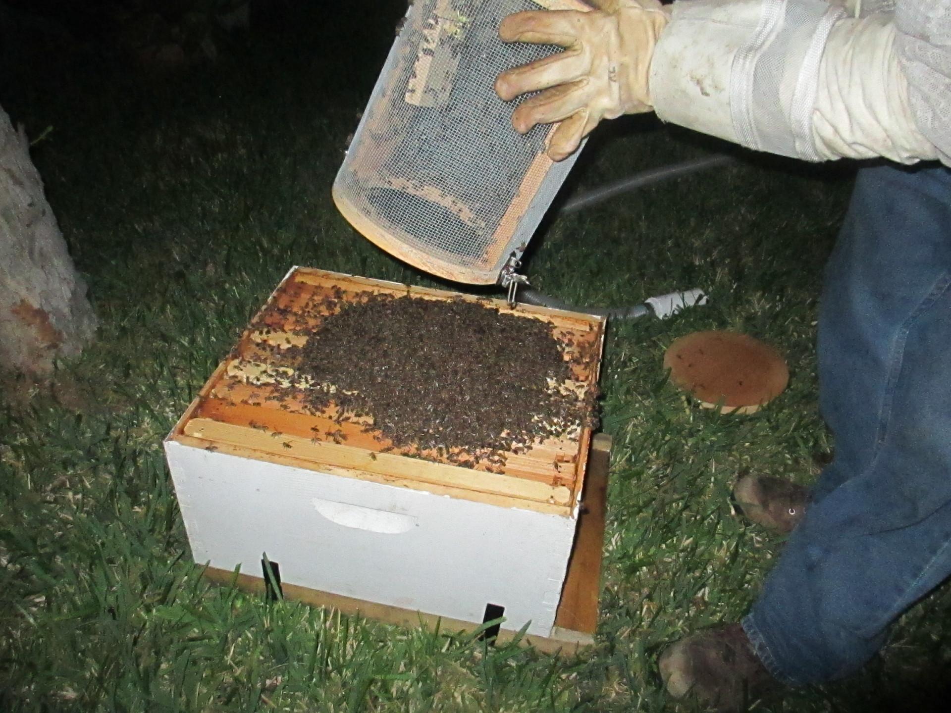 Saved Honey Bees