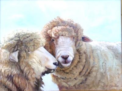 Cottswold Sheep