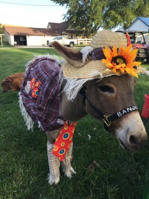 Banjo the Donkey