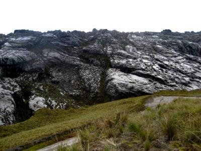 The HWD Ecosystem of Puncak Jaya