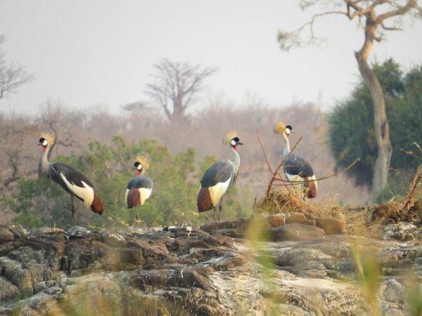 Spectacular Birdlife