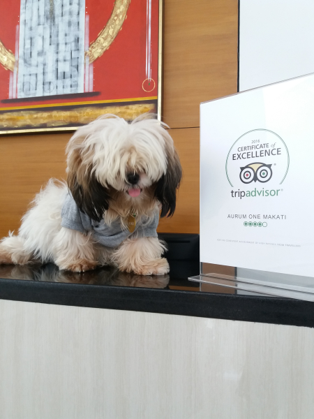 We're a pet-friendly hotel!