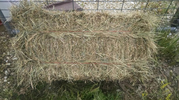 Photo of a single mixed grass bale