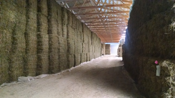 Stacks of hay in the large barn
