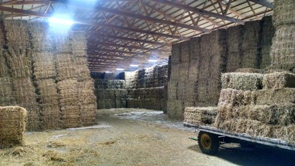 Hay stacks in the big barn