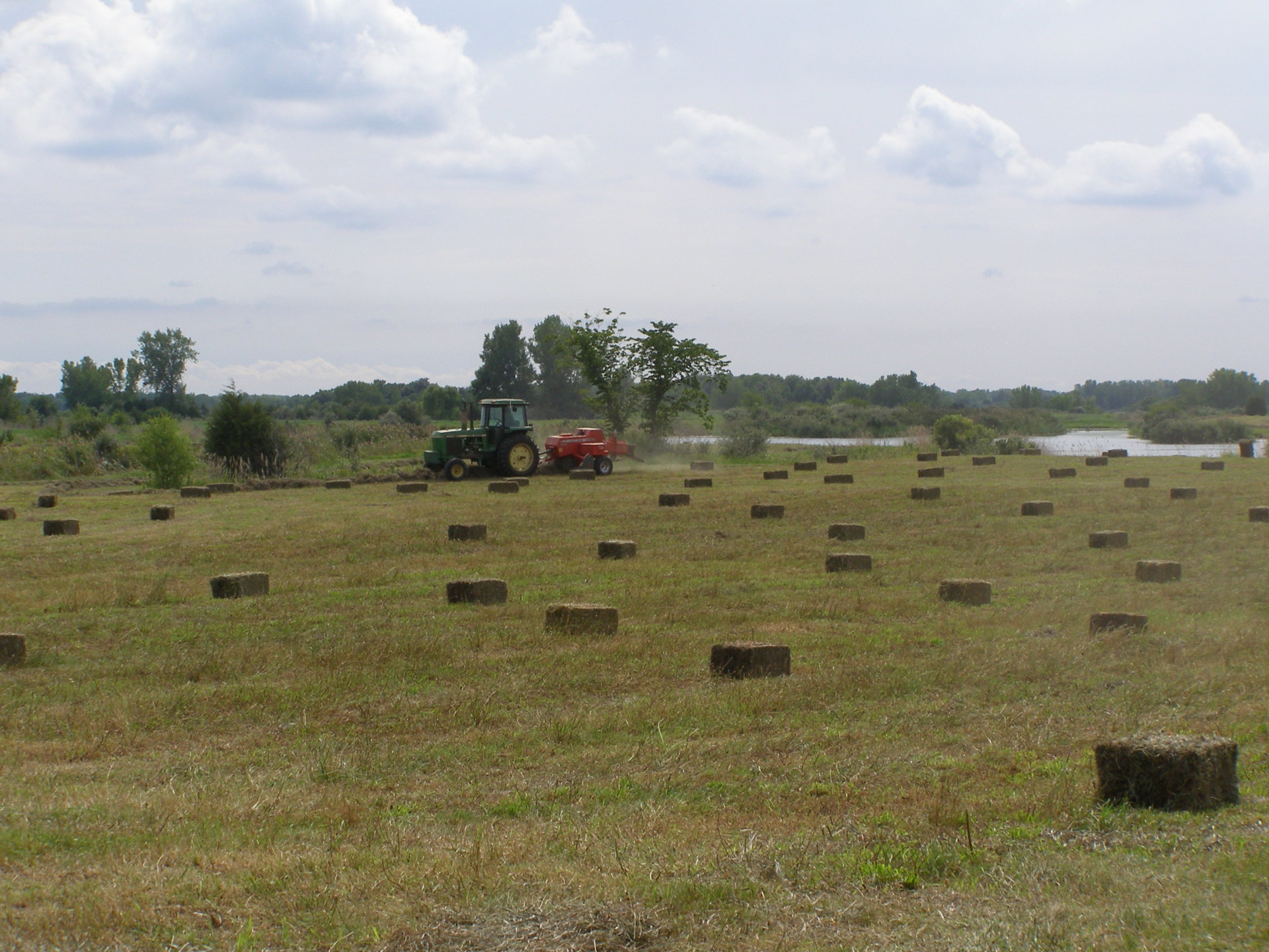 Baling alfalfa-grass mix hay into small squares using Hesston baler and an old John Deere tractor.