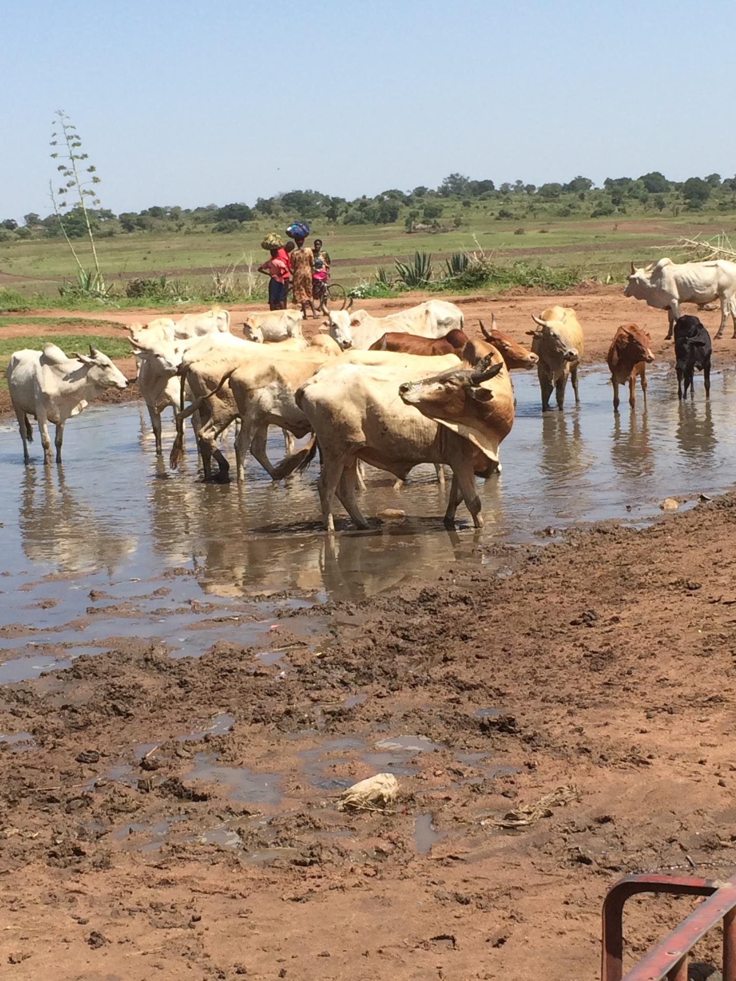 Water, Sanitation, and Education