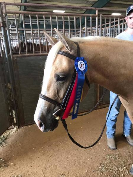 Peanut - Crown Breeze Sport Horses 2017