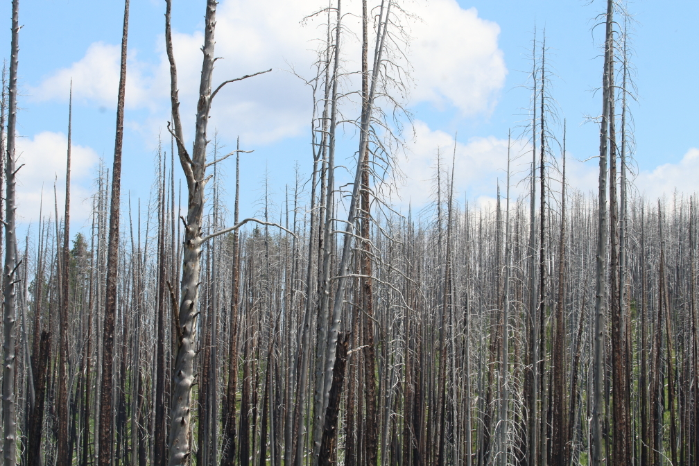scorched forest