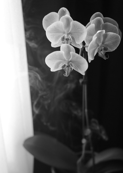 orchids and smoke