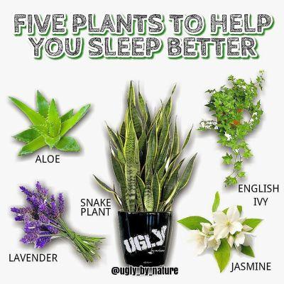 Common Houseplants Can Help You Sleep Better