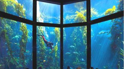 Monterey Bay Aquarium Offers Free Admission Through December 9