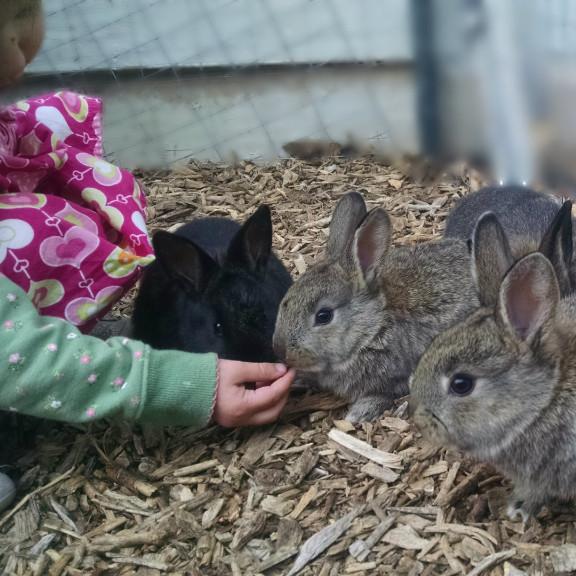 Bunny Haven Bunny Rescue