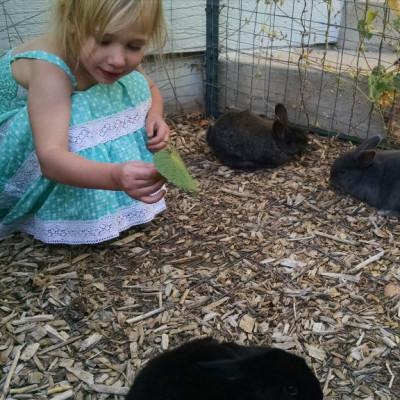 Bunny Playpen for Kits