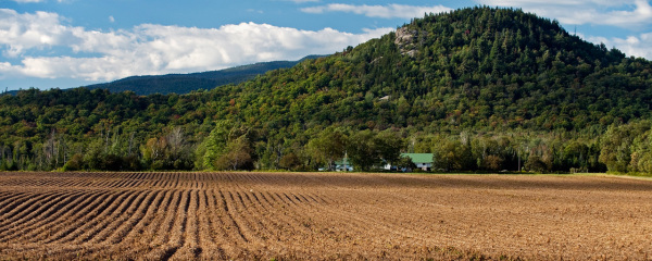 $5.5M in NY state farmland protection grants is available