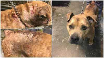 Neglected Dog Found Tied to Sign in Montgomery County