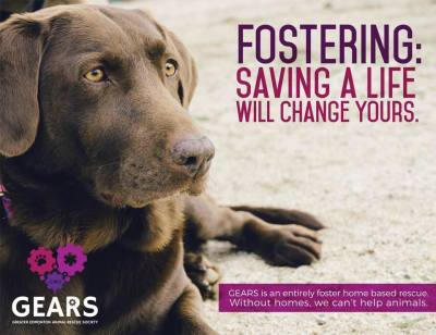 Fostering: The benefits of fostering with GEARS, and how to get started