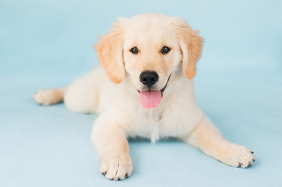 The Dog Photog