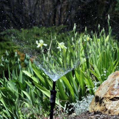 Bubbler sprinkler in an iris bed