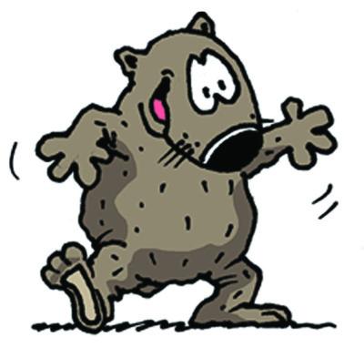 DOUG  (Wombat)