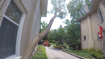 Felling Trees in tight area