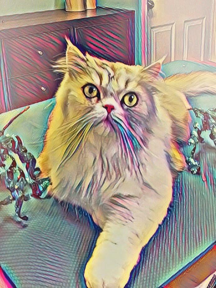 Cat Grooming Titusville