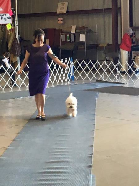 Titusville Show Dogs
