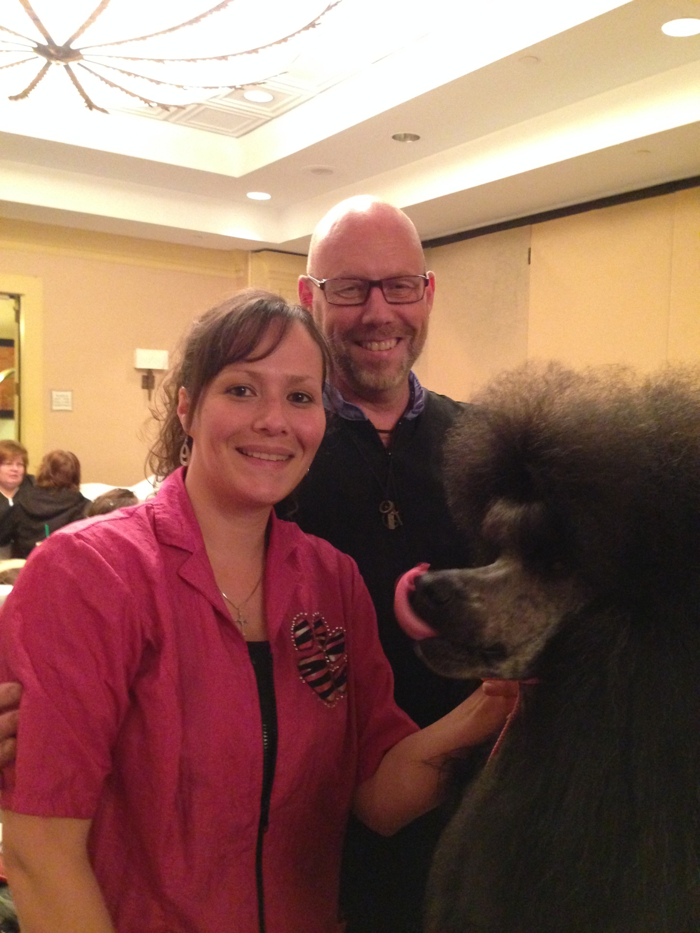 Award Winning Poodle Groomer