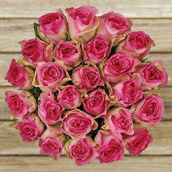 Fuschia Pink Roses