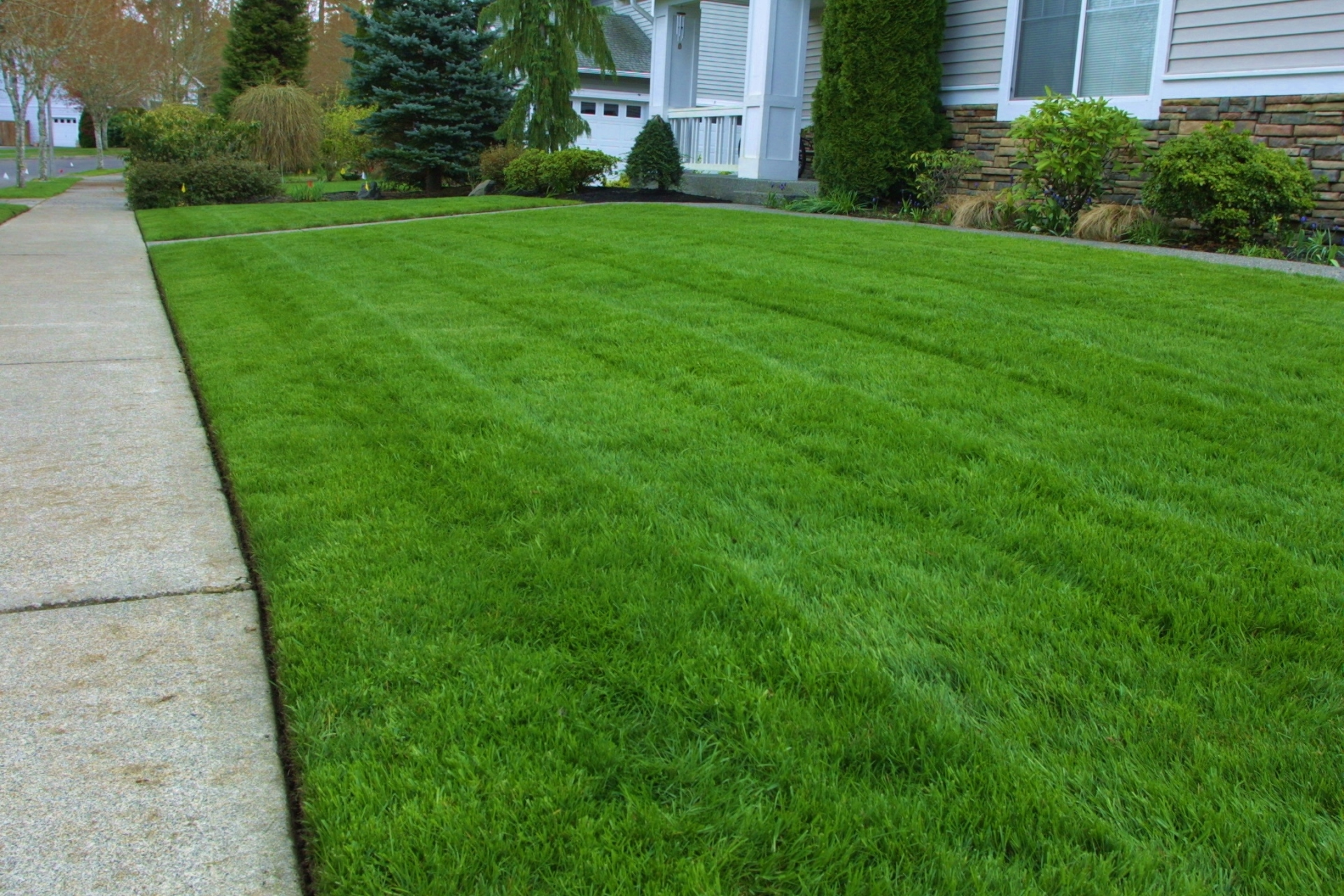 Lawn for Professional landscaping service