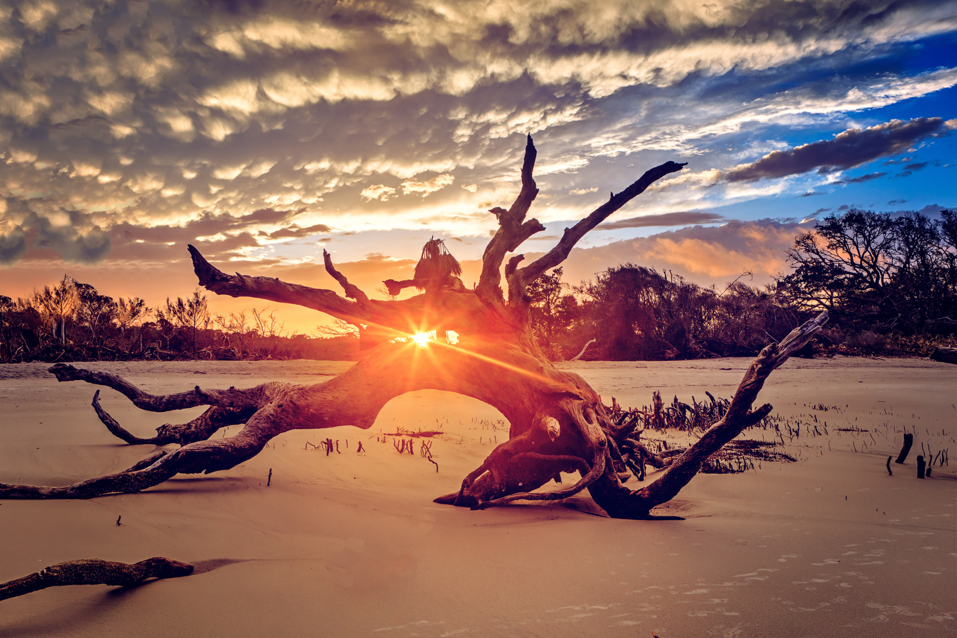 driftwood with sunrise