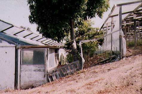 "from ""Light Architecture: Southern California Greenhouse Vernacular"" 2003"
