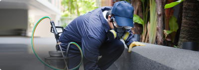 Pest Control Services Are Enormously Useful in Exterminating Pests