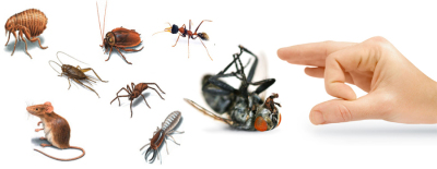 Indoor Pest Control – Make your Home Roaches Free