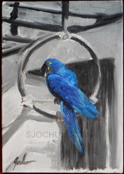 Blue Parrot    $45