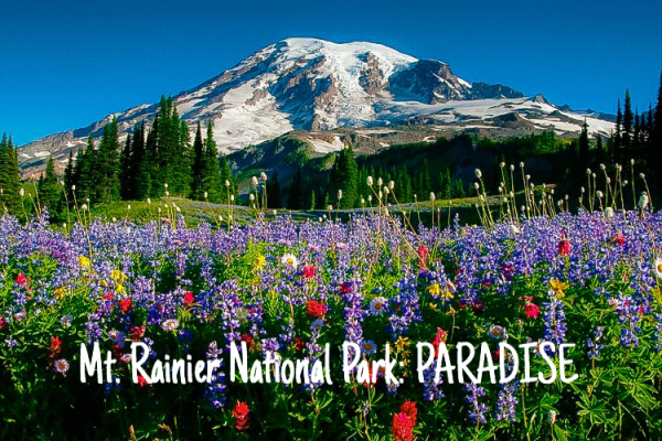 Mount Rainier National Park: Paradise