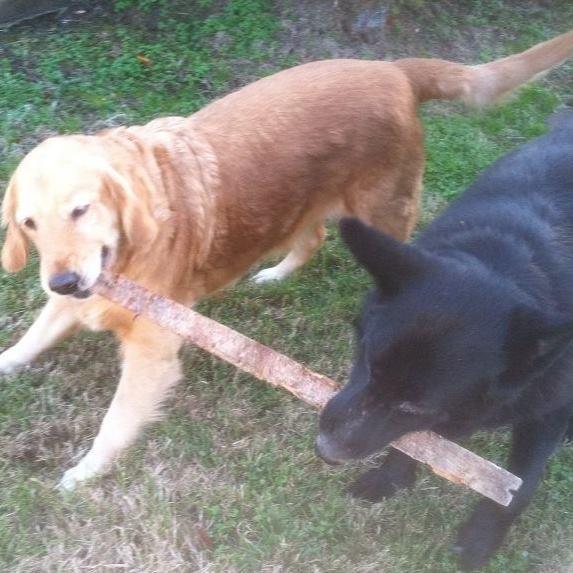 Ember & Cinder sharing a stick