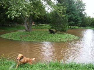 Ember & Cinder in the pond